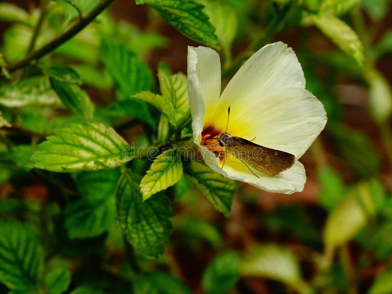 Papillon prenant le pollen d'une belle fleur photo libre de droits