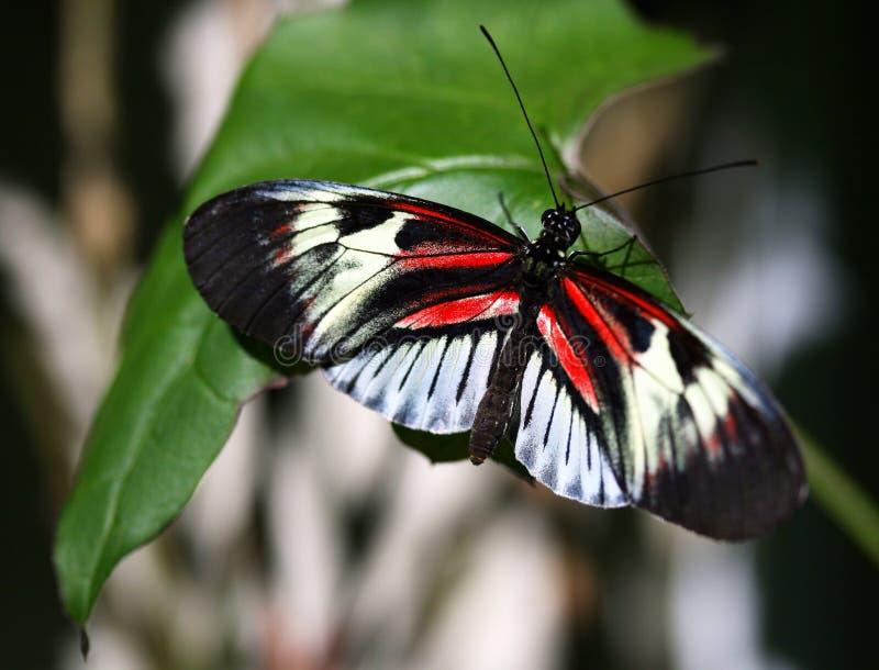 Papillon principal de piano image stock