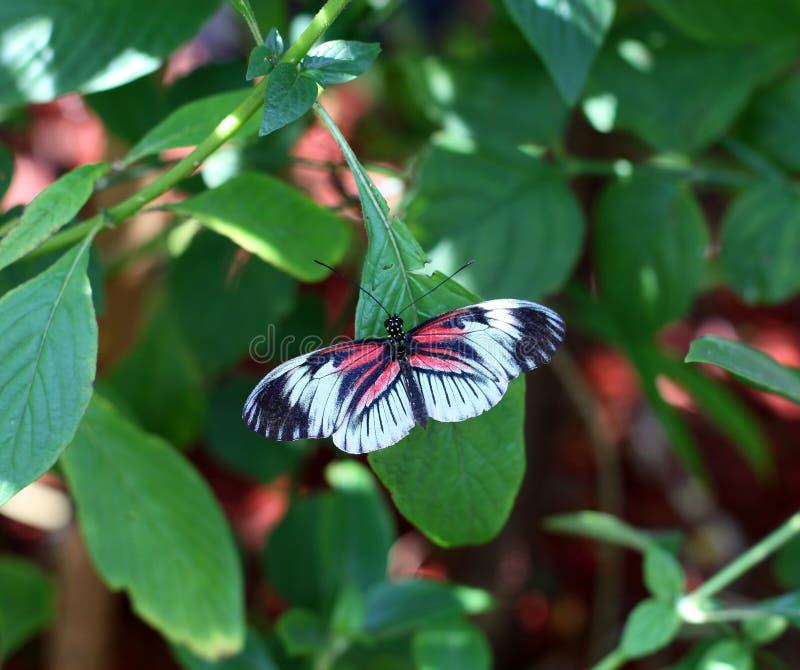 Papillon principal de piano photographie stock libre de droits