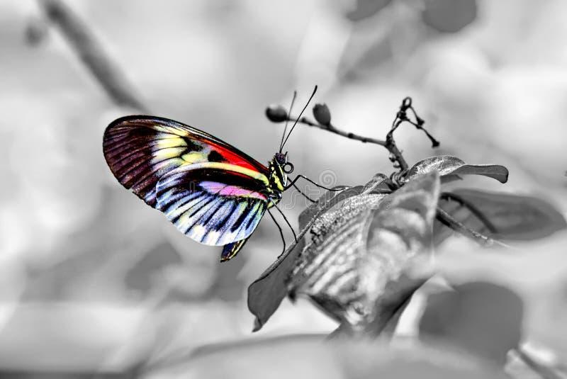 Papillon principal de piano images libres de droits