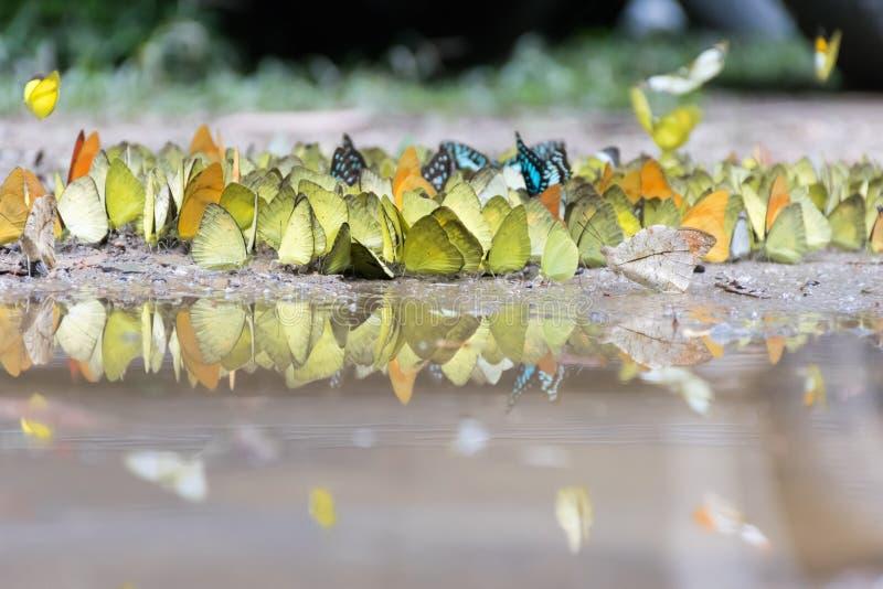 Papillon réfléchi sur l'eau image libre de droits