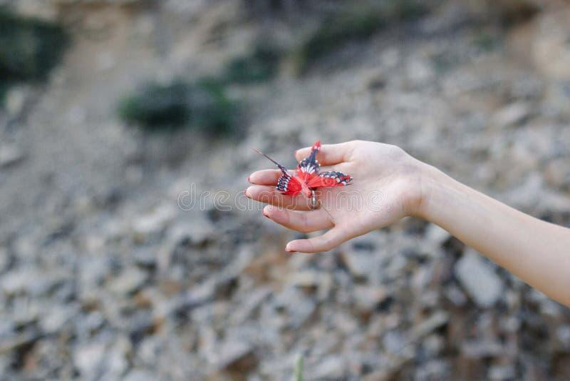 papillon rouge images stock