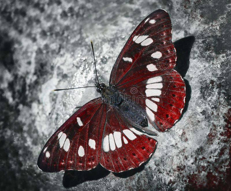 papillon rouge photographie stock libre de droits