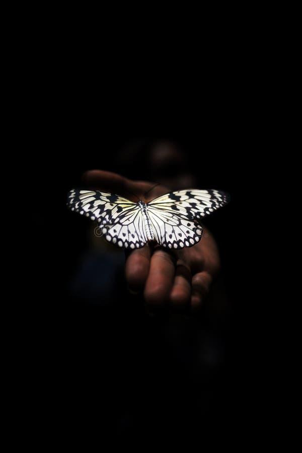 Papillon rougeoyant en main photographie stock libre de droits