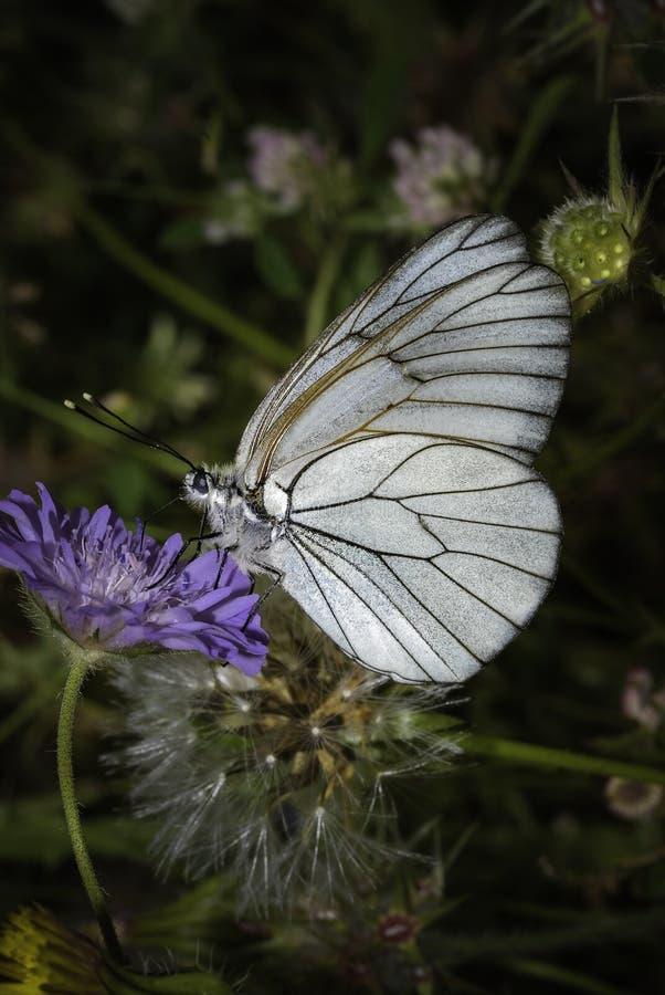 Papillon se reposant sur une fleur bleue photos stock