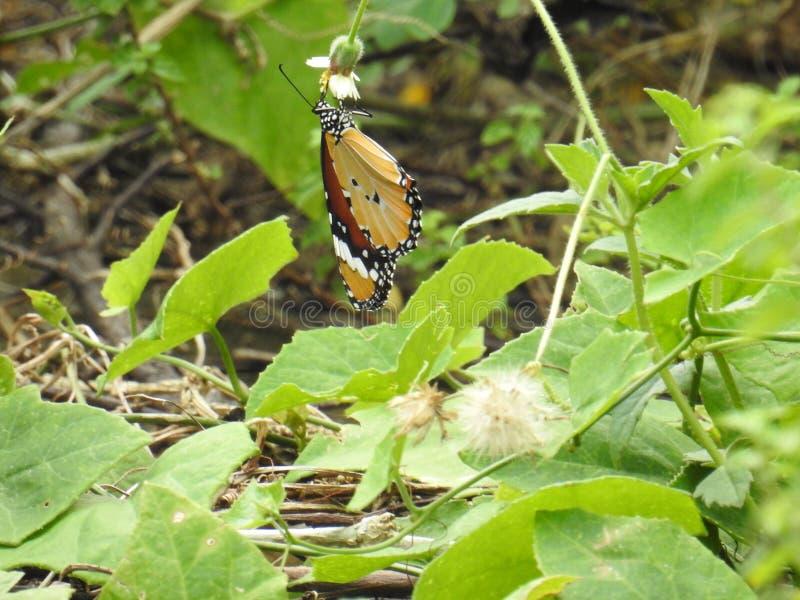 Papillon sur l'herbe photographie stock