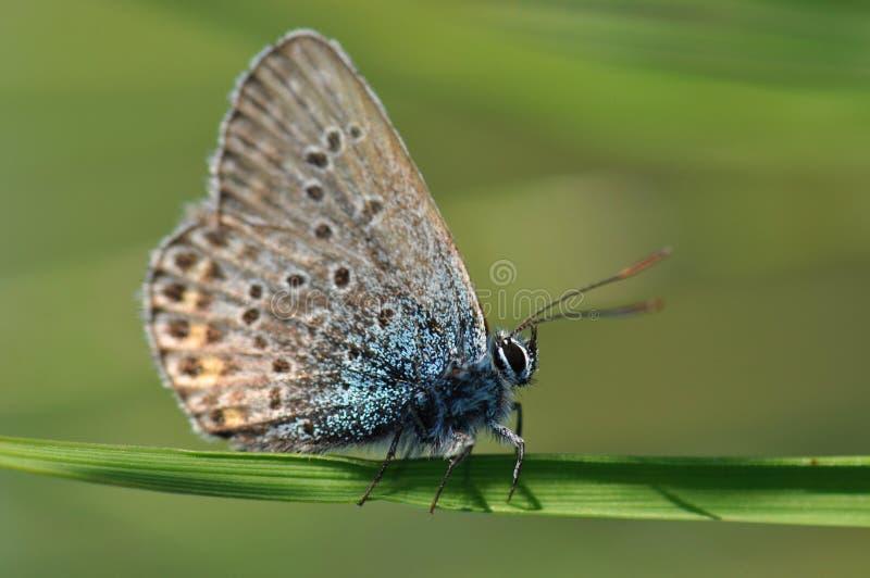 Papillon sur l'herbe photo libre de droits