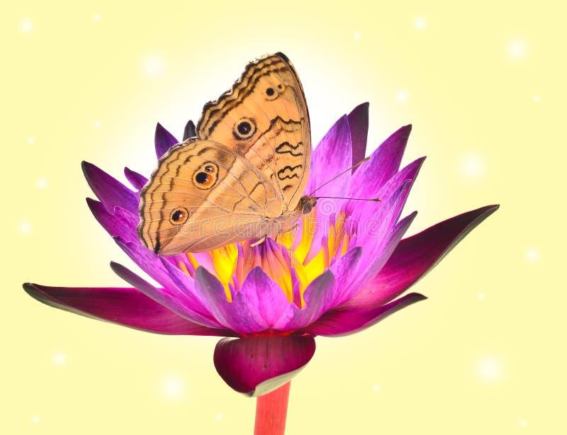Download Papillon sur la fleur image stock. Image du floraison - 45360073
