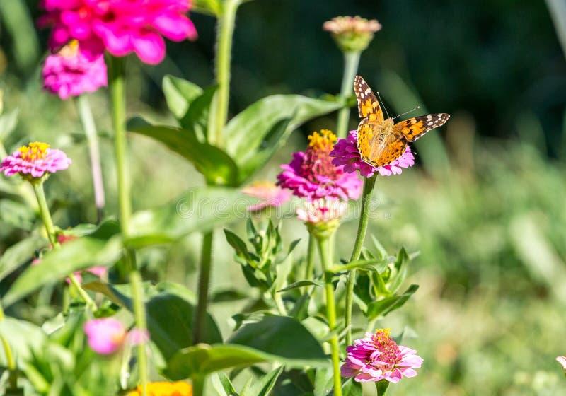 Papillon sur la fleur image stock