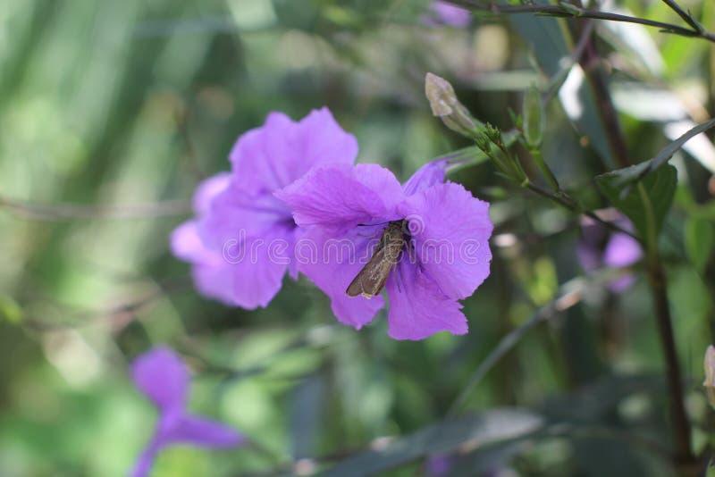 Papillon sur la fleur pourpre images libres de droits