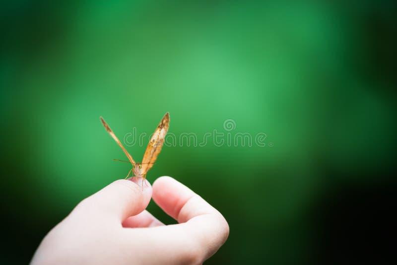 Papillon sur la main de la fille, fond vert de bokeh de tache floue, foyer sur l'oeil, concept d'harmonie de nature, avec l'espac photographie stock libre de droits