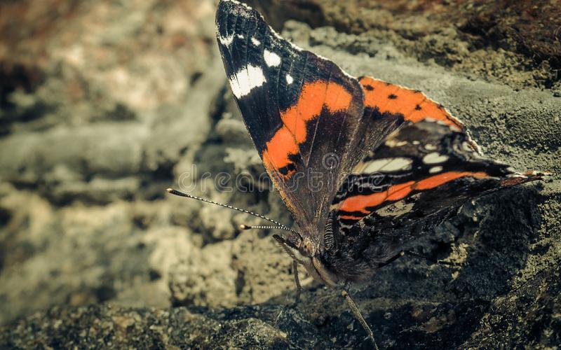 Papillon sur la roche images stock