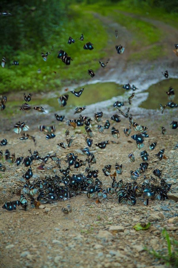 Papillon sur la route photo libre de droits