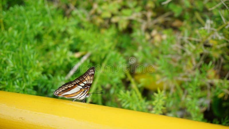 Papillon sur le pont photos libres de droits