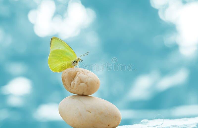 Papillon sur les pierres équilibrées image stock