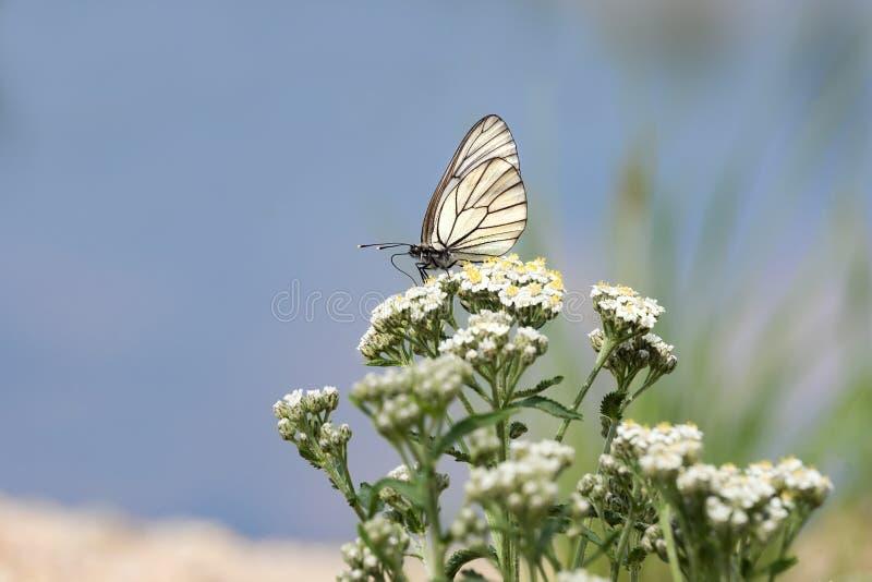 Download Papillon sur un fond bleu photo stock. Image du été, lumineux - 76087292