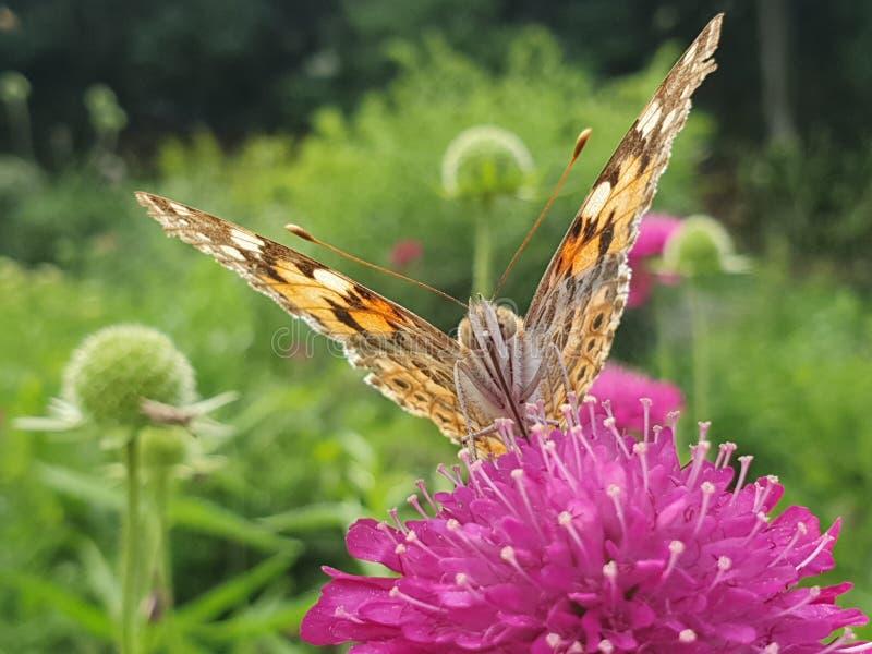 Papillon sur une fin de fleur images libres de droits