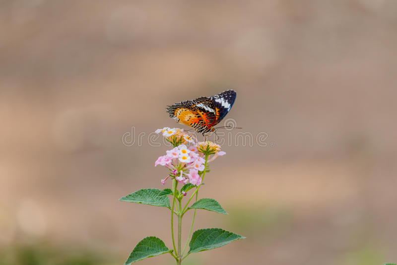 Papillon sur une fleur dans le soleil de matin photos libres de droits