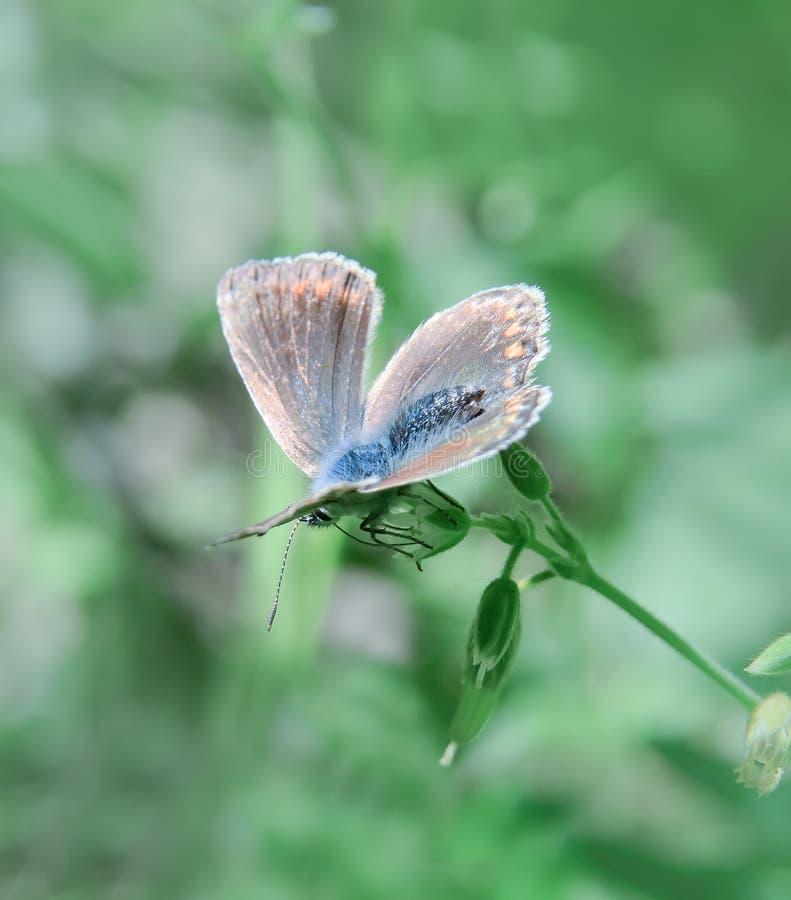 Papillon sur une fleur sauvage Le fond vert clair souligne la végétation photographie stock