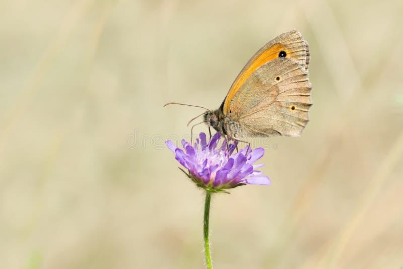 Papillon une fleur images libres de droits