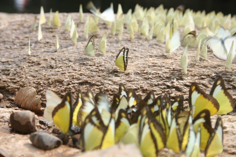 Papillons : La dépendance et Social image stock