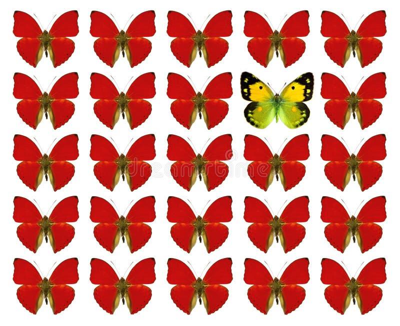 Papillons montrant le concept de la différence, individualité, foule, position, liberté, photo stock