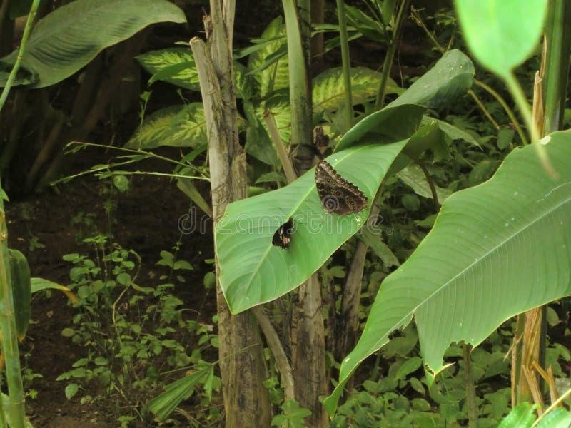 Papillons se reposant sur une usine à l'intérieur d'une grande serre chaude images libres de droits