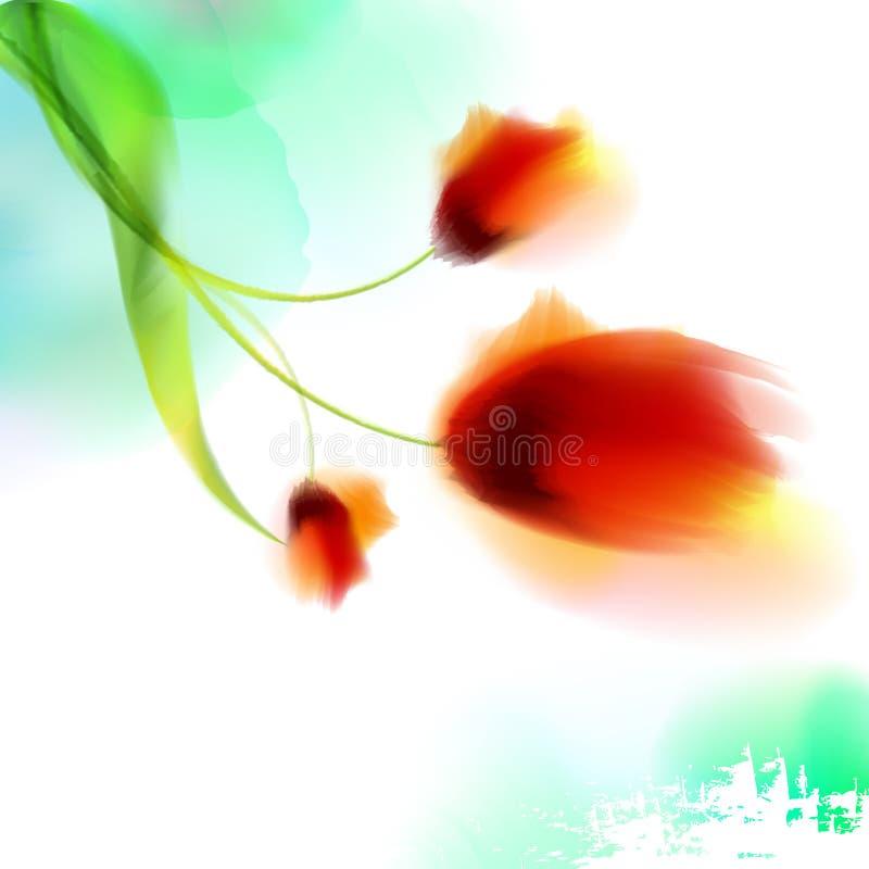 A papoila de florescência romântica da aquarela floresce o molde isolado da ilustração para o casamento, dia de são valentim, dia ilustração do vetor