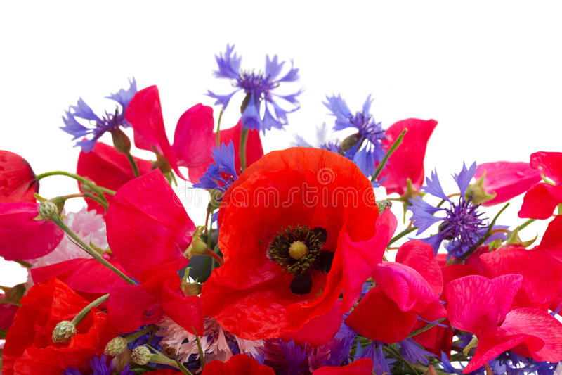 Papoila, ervilha doce e flores do milho imagens de stock royalty free