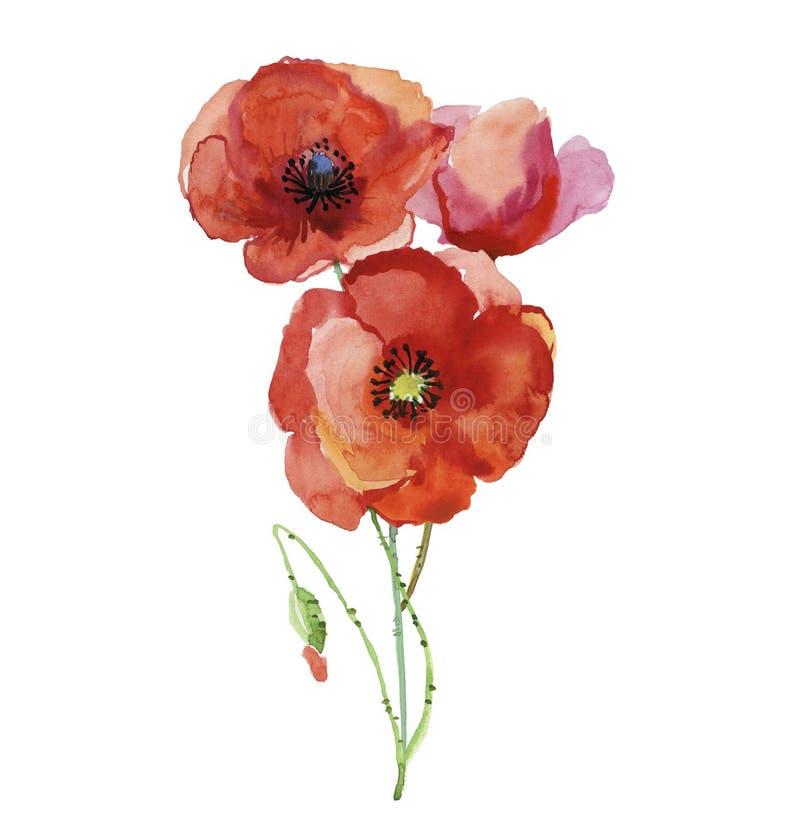 A papoila estilizado floresce a ilustração Flor original, ilustração da aquarela ilustração stock