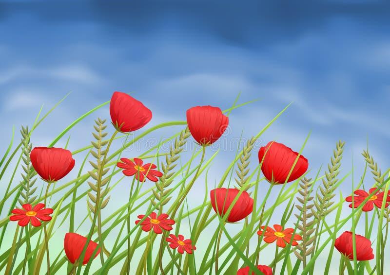 Papoila-flores e margaridas vermelhas no prado do verão ilustração royalty free