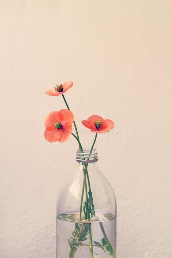 A papoila floresce em um vaso de vidro da garrafa de leite fotos de stock royalty free