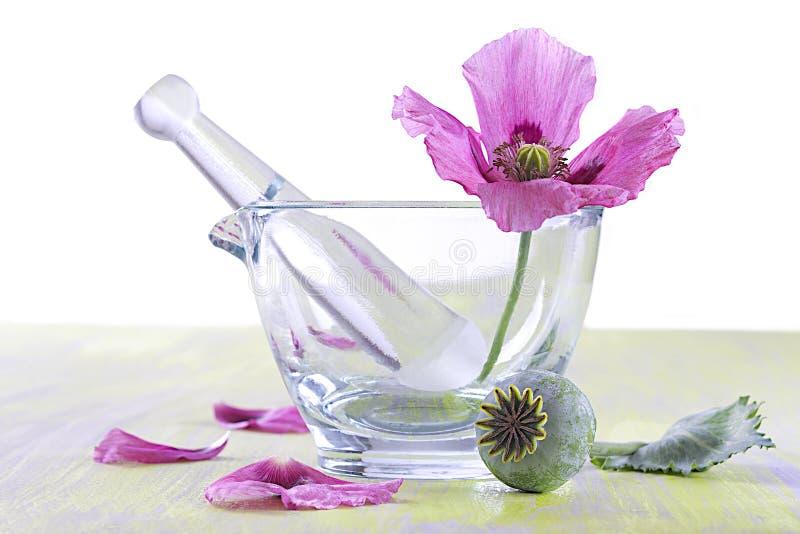 PAPOILA - Sementes da cápsula da flor imagens de stock