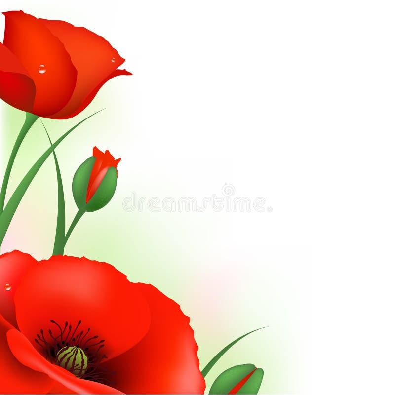 Papoila vermelha ilustração royalty free