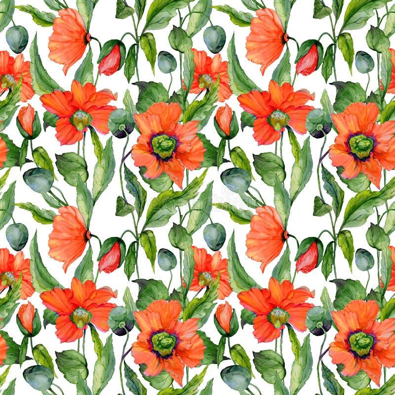 A papoila vermelha bonita floresce com as folhas verdes no fundo branco Teste padrão floral do verão sem emenda Pintura da aguare ilustração royalty free