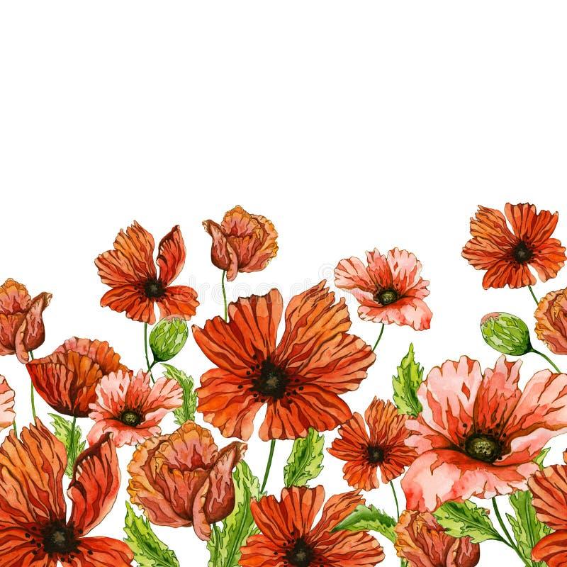 A papoila vermelha bonita floresce com as folhas verdes no fundo branco Teste padrão floral sem emenda Pintura da aguarela ilustração do vetor