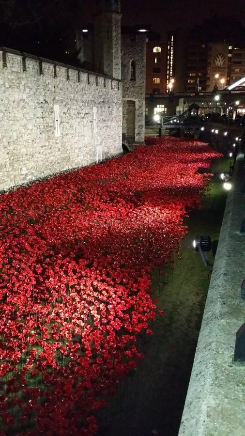 Papoilas centenárias na torre de Londres fotos de stock royalty free