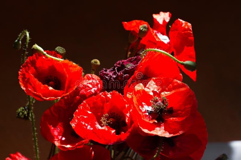 Papoilas do ramalhete Sinal vermelho das flores do dia da relembrança do mundo fotografia de stock royalty free