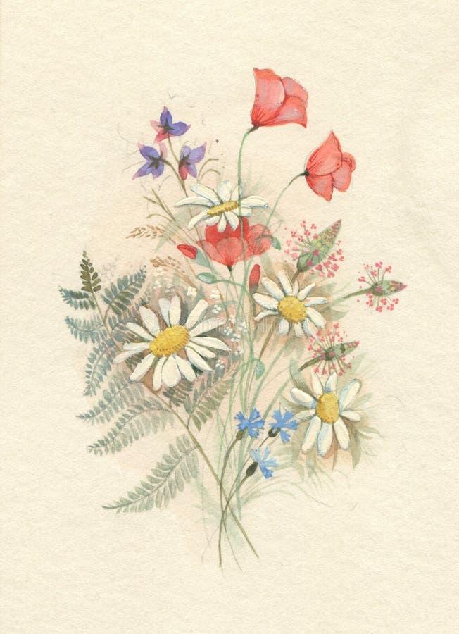 Papoilas e margaridas ilustração stock