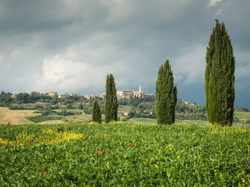 Papoilas em um campo em Toscânia, Itália imagem de stock