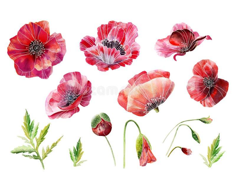 Papoilas vermelhas da aquarela com folha verde Elementos para criar um projeto ou um teste padrão ilustração royalty free
