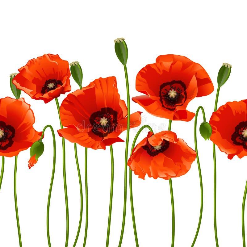 Papoilas vermelhas em seguido. ilustração royalty free