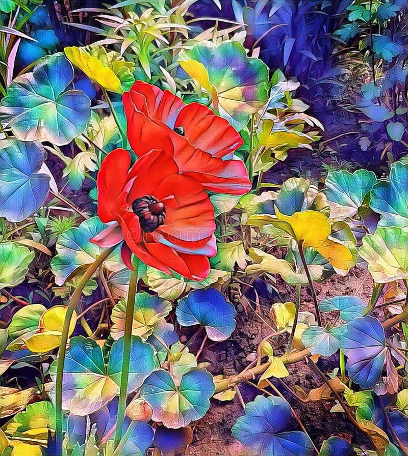 Papoilas vermelhas na primavera no gramado perto da casa foto de stock royalty free