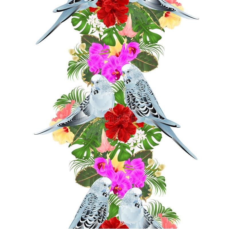 Pappagallini ondulati senza cuciture del fondo del confine tropicale, animale domestico domestico, parrocchetto blu dell'animale  royalty illustrazione gratis