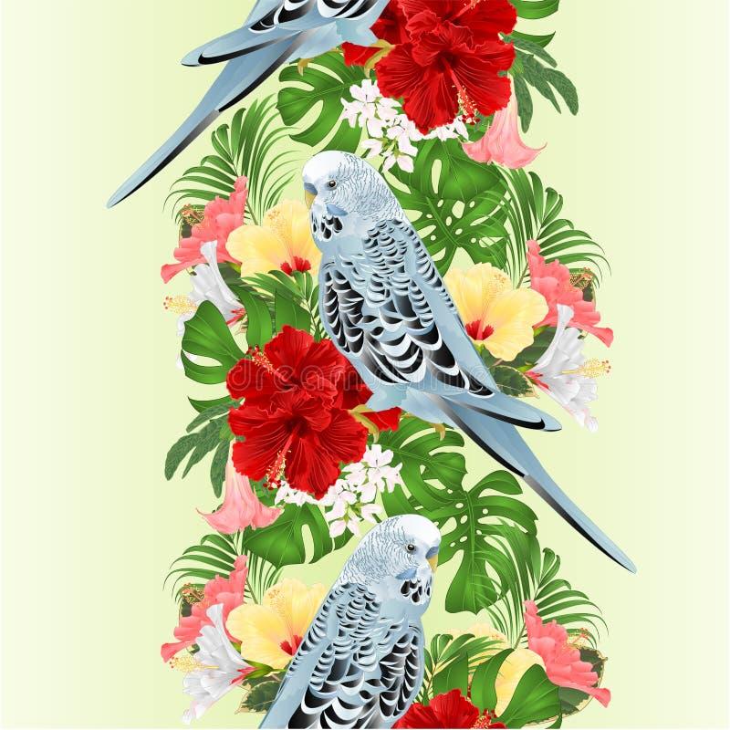 Pappagallino ondulato senza cuciture del fondo del confine tropicale, animale domestico domestico, parrocchetto blu dell'animale  illustrazione vettoriale