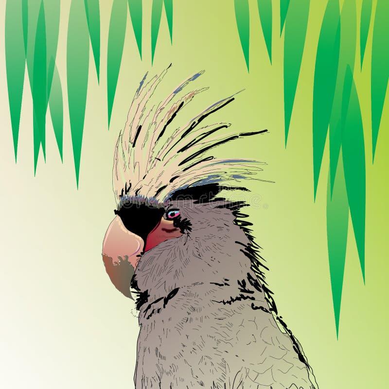 Pappagallo degli uccelli fotografia stock