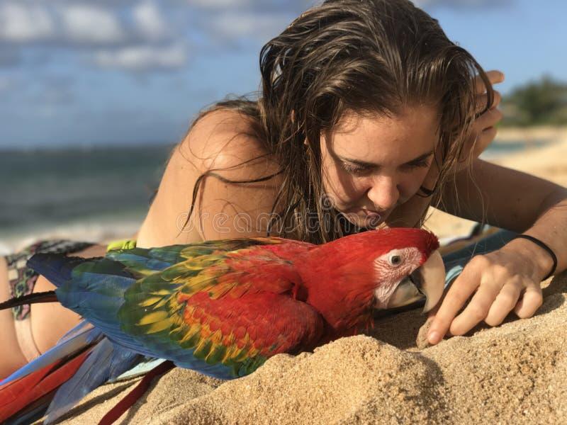 Pappagallo dell'ara alla spiaggia immagine stock libera da diritti
