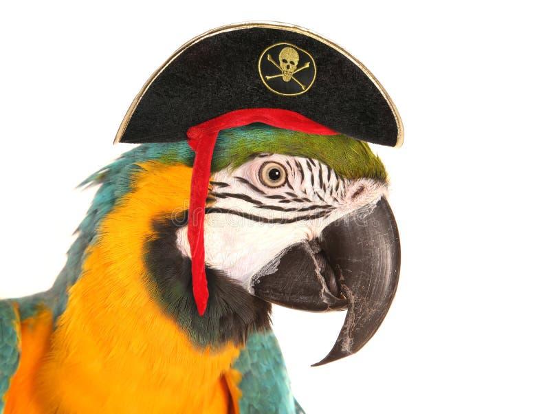 Pappagallo dell'ara del pirata fotografia stock libera da diritti