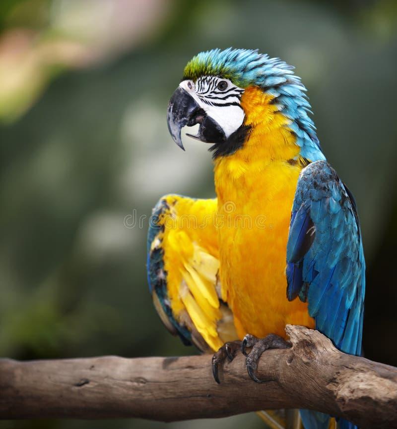 Pappagallo in foresta pluviale verde. fotografie stock libere da diritti