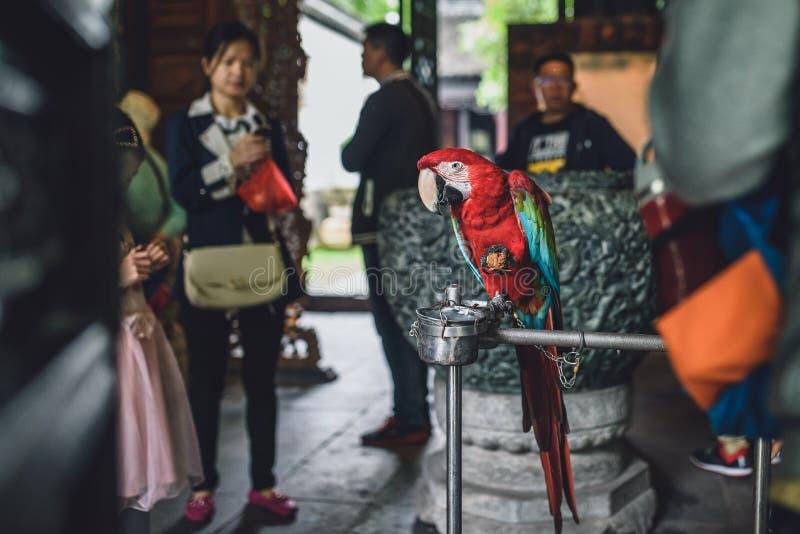 Pappagallo incatenato nella città antica di Zhujiajiao, Cina immagini stock libere da diritti